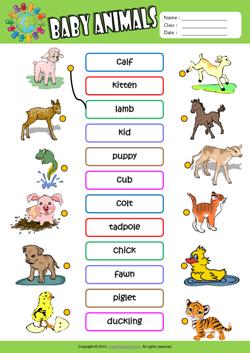 Worksheets Exercise Worksheets For Kids baby animals esl printable worksheets for kids 1 matching exercise worksheet kids