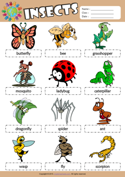 Insects Picture Dictionary ESL Vocabulary Worksheet