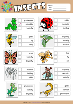 Insects ESL Multiple Choice Worksheet For Kids