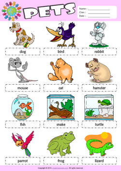 Pets Picture Dictionary ESL Vocabulary Worksheet