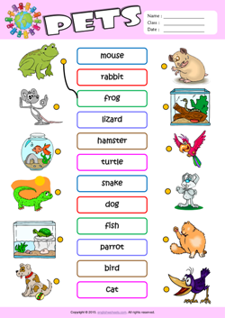 Pets ESL Matching Exercise Worksheet For Kids