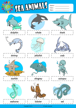 Sea Animals Picture Dictionary ESL Vocabulary Worksheet